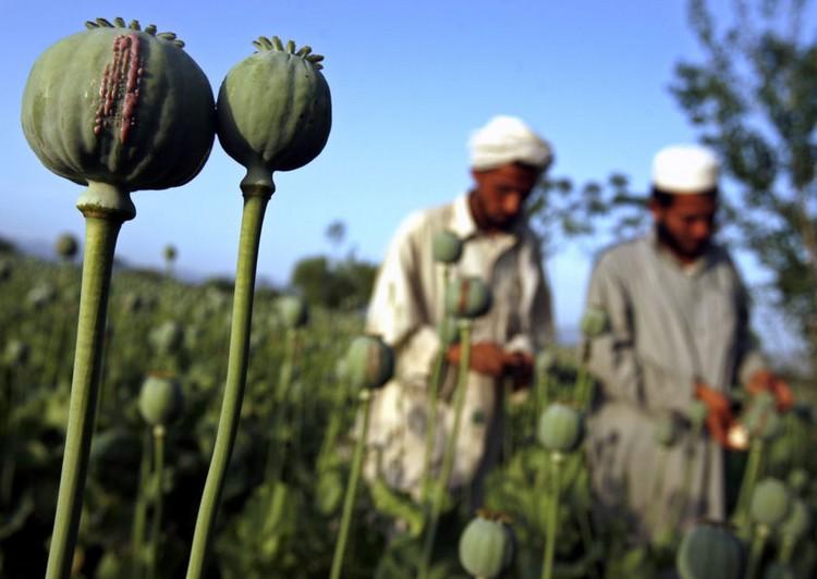 afghanistan-opium-001